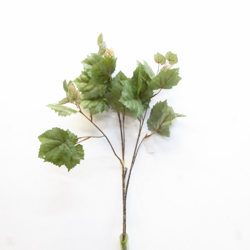 ветка лист винограда
