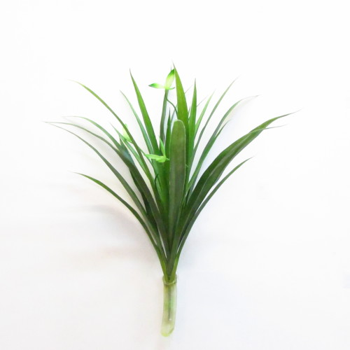 зелень с корнем